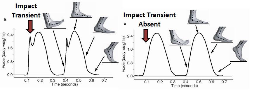 Ground Reaction Force - rozkład nacisku w zależności od stylu biegu