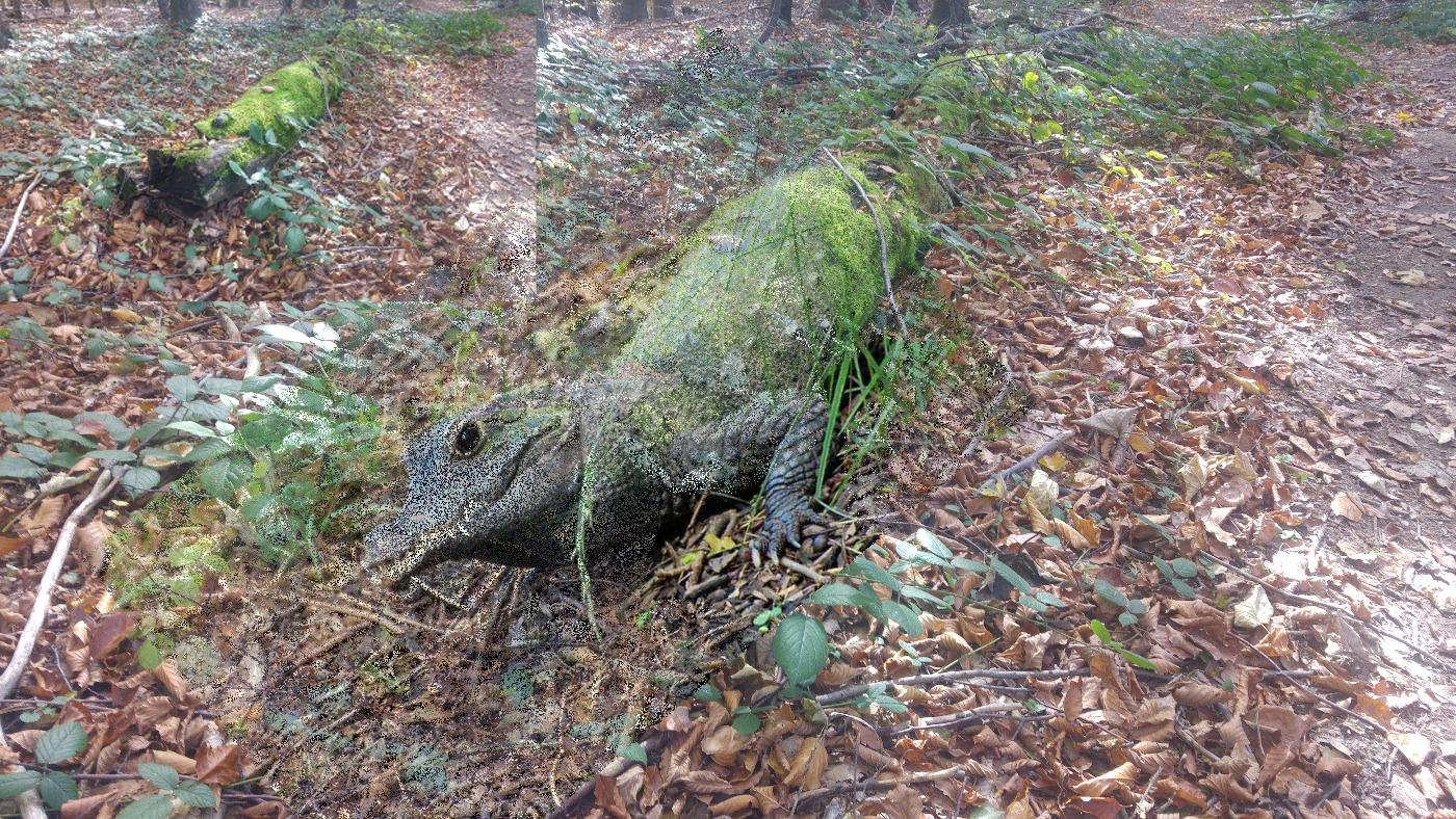 Z daleka leżący na boku misio, z bliska krokodyl!
