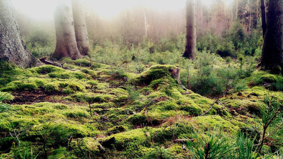 Sätila Trail - zielona pułapka