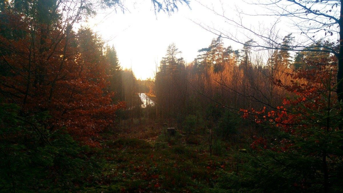 ...więcej jesieni