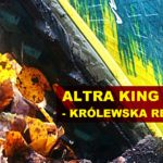 Altra King MT 1.5 - test i recenzja