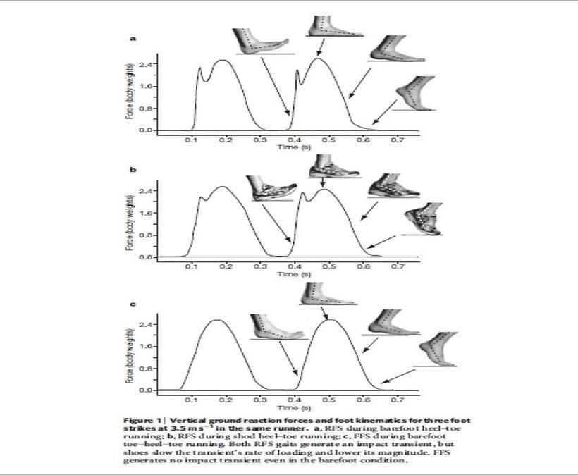 Działanie sił uderzenia w zależności od techniki biegu