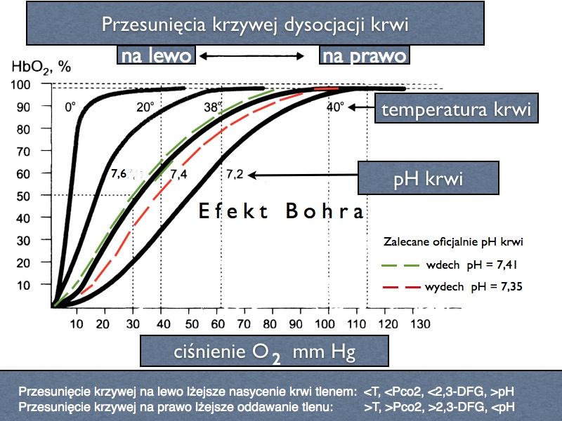Krzywa Bohra - CO2 jest OK