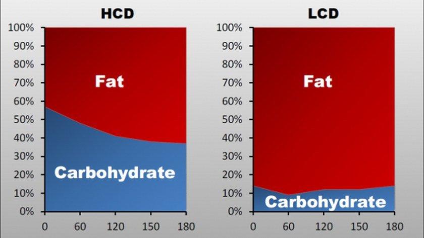 Tłuszcz a bieganie - adaptacja organizmu