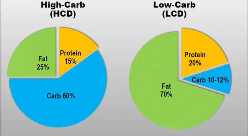 LC vs HF diet