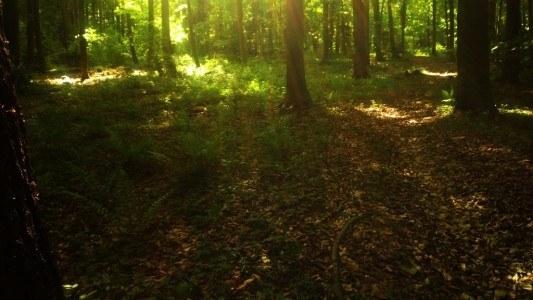 Las w górach świętokrzyskich
